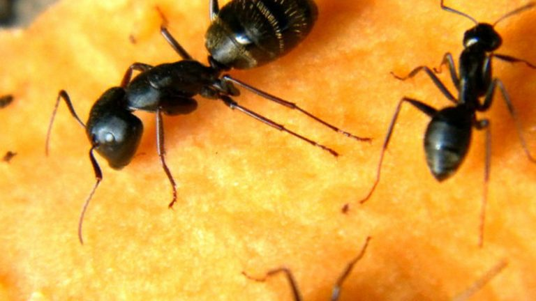 Ant Killers Types