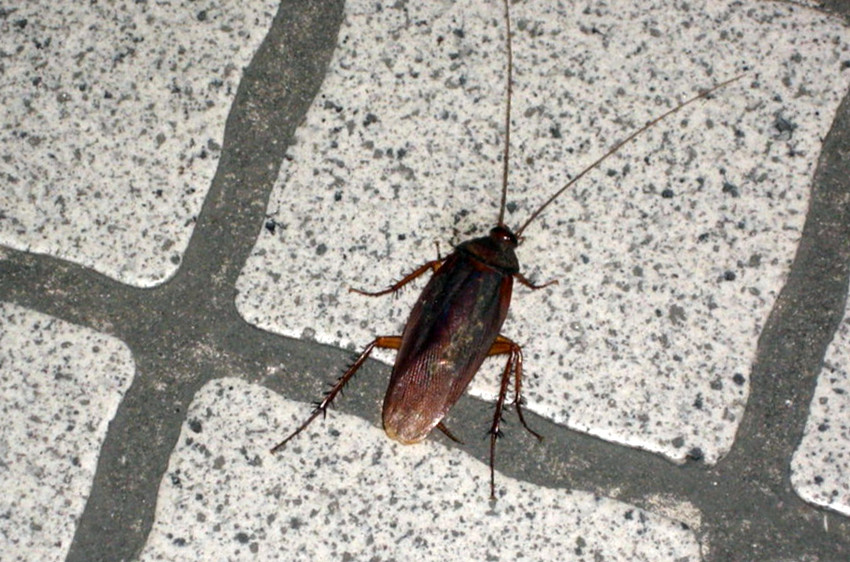 Roach on the floor