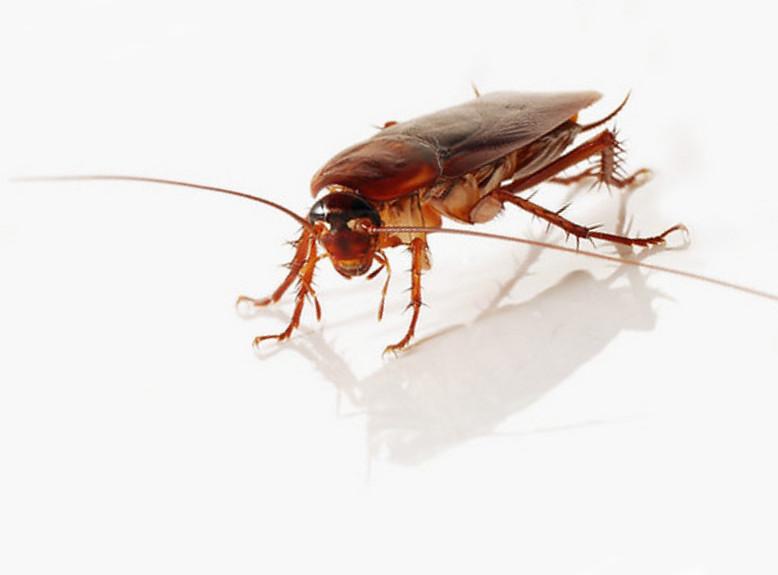 Roach Killers Types