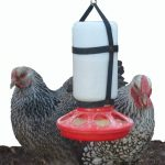 Your Happy Chicks 1 Qt. Hanging Harness with Plastic Bottle and Feeder